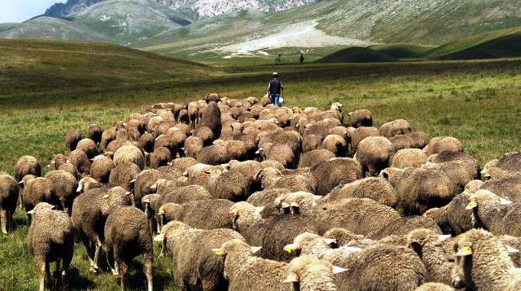 Vendi i mrekullueshëm që kërkon barinj me eksperiencë, paga e kënaqshme: Mbi 2 mijë euro