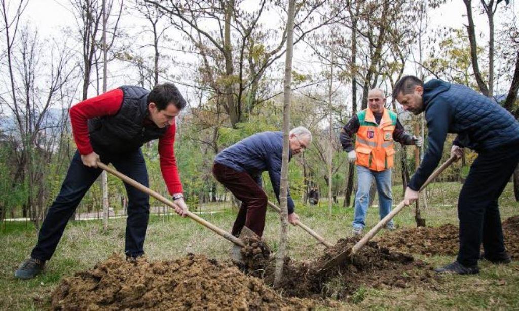 """""""Varjen në pemë po e mendojmë!"""", Veliaj """"i përgjigjet"""" Ramës, me mbjelljen e 2 milionë pemëve të tjera"""