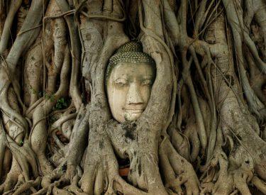 Koka e Budës del nga rrënjët e një peme, çfarë u zbulua në qytetin antik