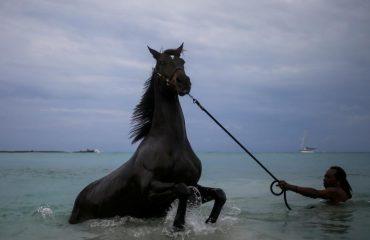 Ky djalosh kujdeset shumë për kafshën, shikoni si gëzon kali kur lahet në det