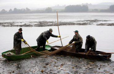 Krapi nuk gjuhet vetëm në Shkodër, shikoni si e mbushin rrjetën këta peshkatarë
