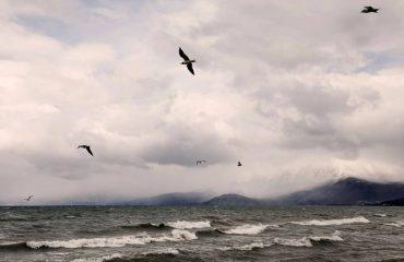 Projekti, për të mbrojtur 1,600 specie të florës dhe faunës në Liqenin e Prespës (Foto)