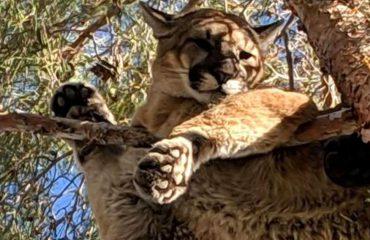 SHBA/ Luani ngec në majë të pemës, tre zjarrfikës ngjiten dhe e shpëtojnë