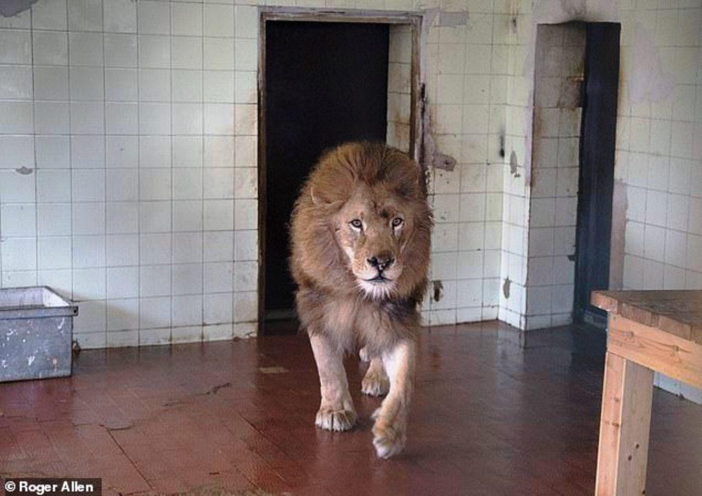 """Tre luanët vuajnë ende në Shqipëri, """"Daily Mail"""" kontakton Ministrinë e Turizmit"""