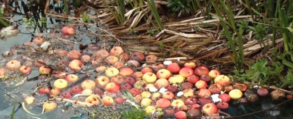 Fermerët e Devollit s'kanë treg për mollët, mundi i një viti shkon në lum