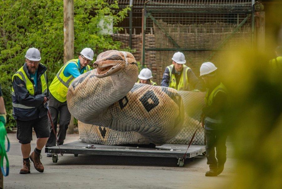 FOTOT/ Mega-grabitqarët më të rrezikshëm në botë, hapet ekspozita e parë me kafshët robote