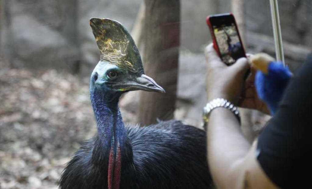 Zogu më i rrezikshëm në botë mbyt pronarin me kthetra, familjarët do të vendosin për fatin e shpendit-vrasës