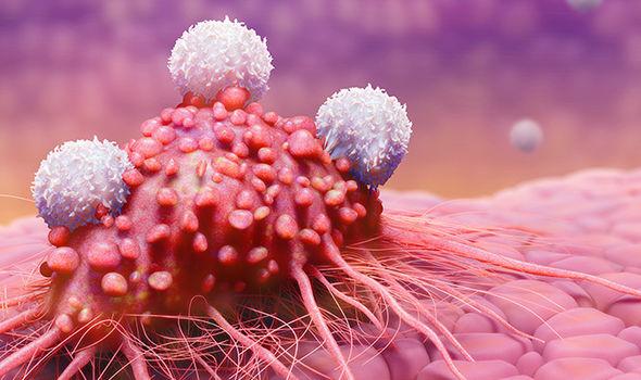 ALARMI/ Po shtohen shumë rastet e kancerit të penisit, ja shenjat që paralajmërojnë rrezikun