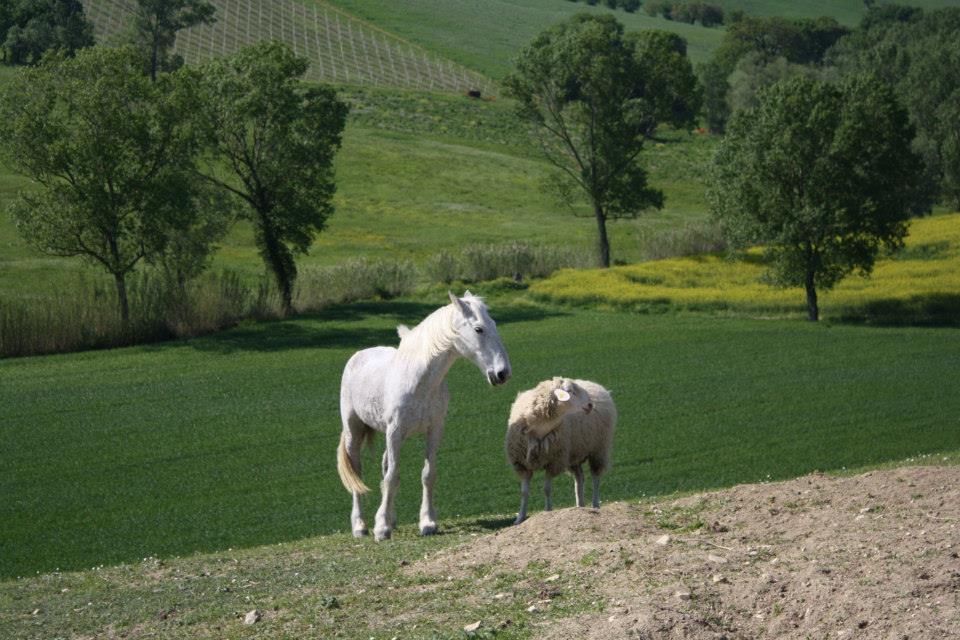 Miqësia e pazakontë mes një kali dhe një dhie