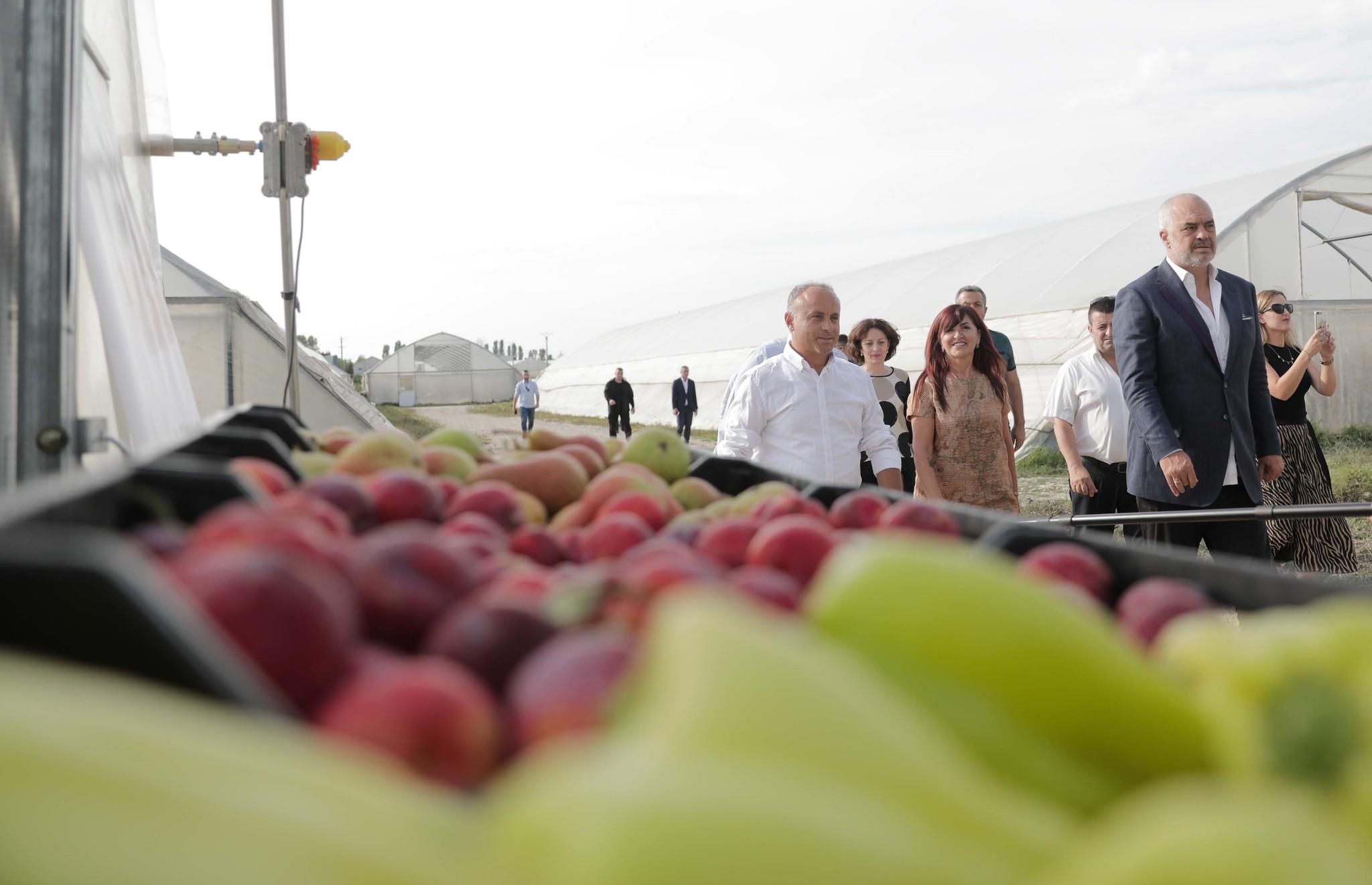 Rama kthehet te fshatarët: Produktet bujqësore shqiptare drejt tregjeve europiane